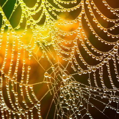 Die Spinne gibt auf!